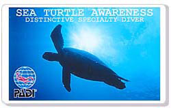 Sea Turtle Awareness